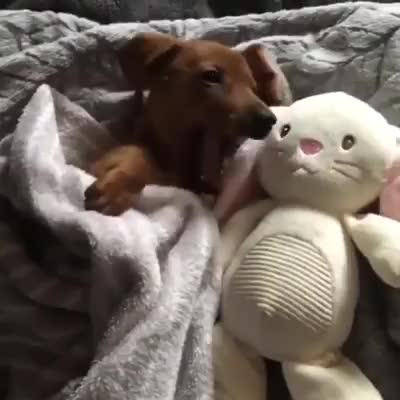 Sleepy time. .. such a good pupper