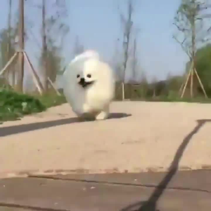 He's like a happy, friendly cloud. .. i don't know where he run but i hope he will reach his destination, also what is the sound? it's relaxing.