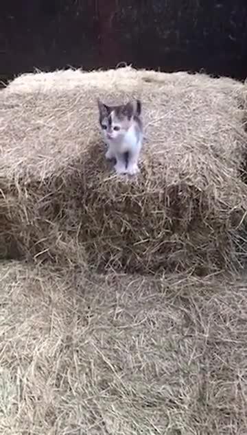 leap of faith. .. Pretty good little jump