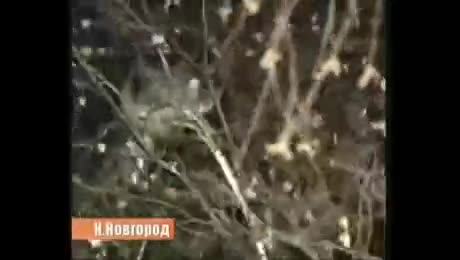Russian Cat Rescue Squad!. The cat lived... There's even a song about it: https://m.youtube.com/watch?v=2KDZg1-7KsE