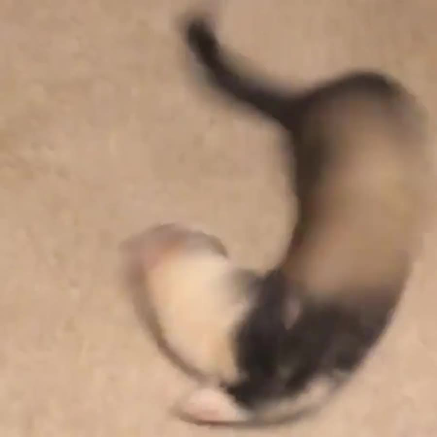 onerous ahead President. .. Who need wind turbine when we can give ferrets some caffeine and has it spin indefinitely.