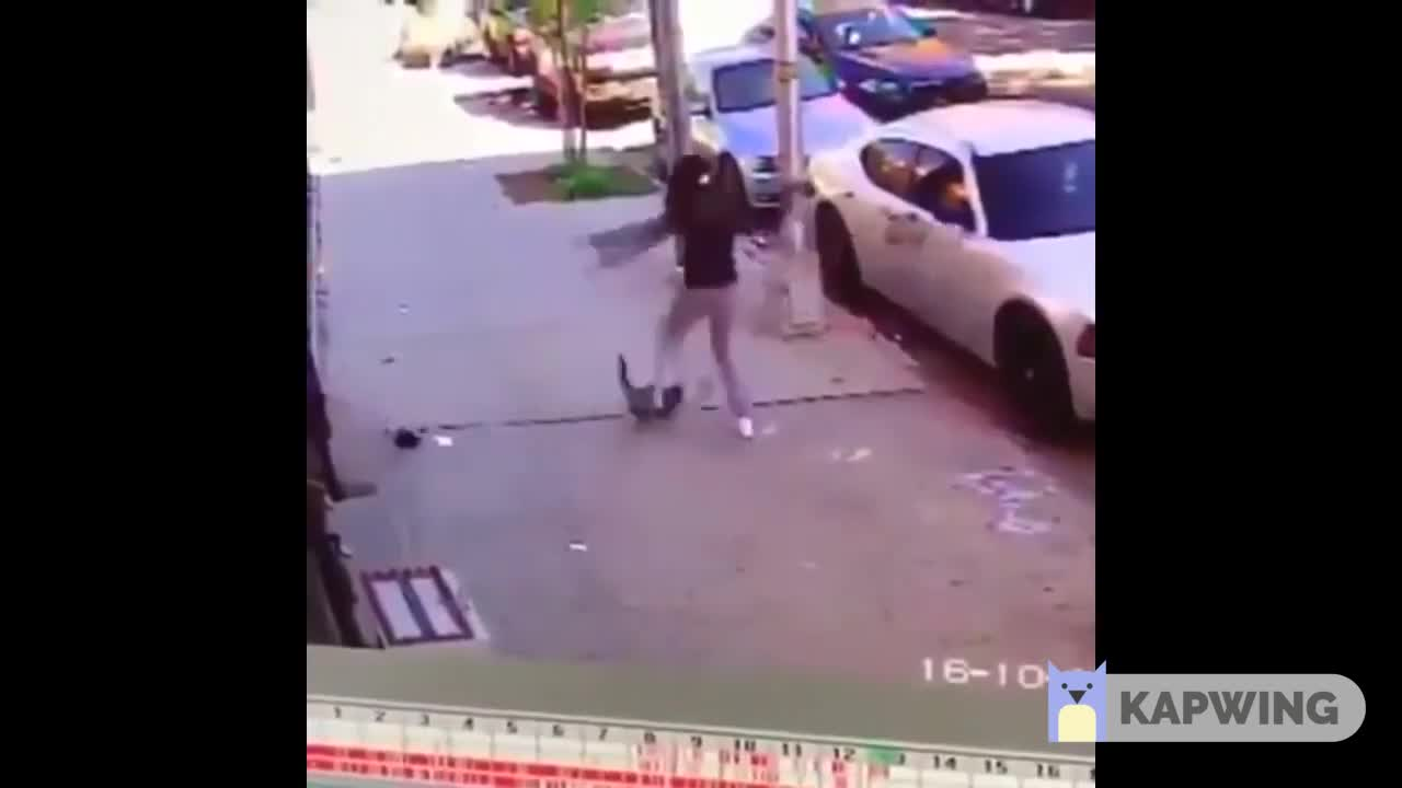 Helicopter dog. Terrible owner for doing this, but the dog is alive at least... Why you even get a dog when you're not going to protect it like it would you