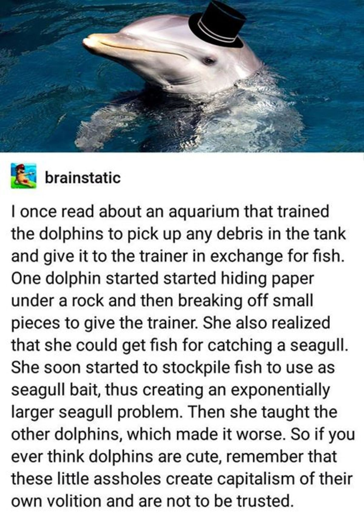 2nd most intelligent species on the planet followed by humans. .. >Second most intelligent animal on the planet >Innately starts capitalistic ventures