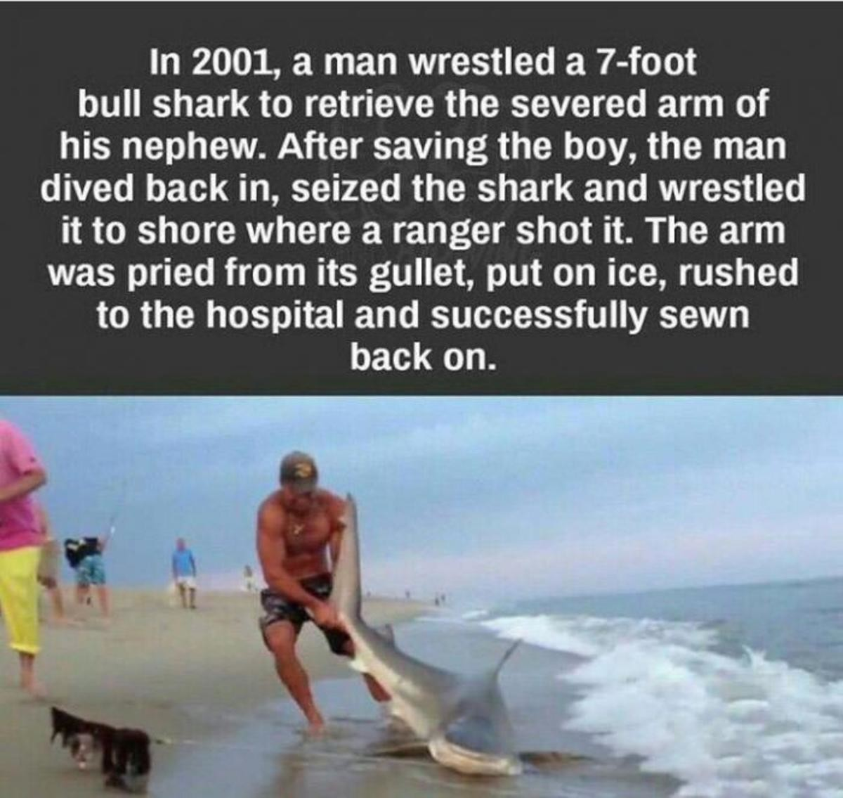 A Bad Enough Dude To Save The President. .. If you can't wrestle a shark what are you even doing with your life?