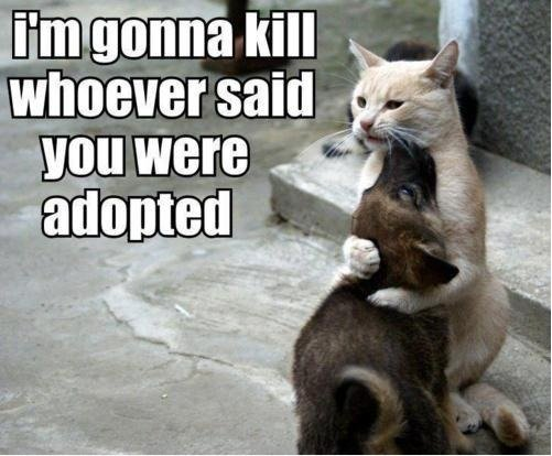Adopted. . Tail