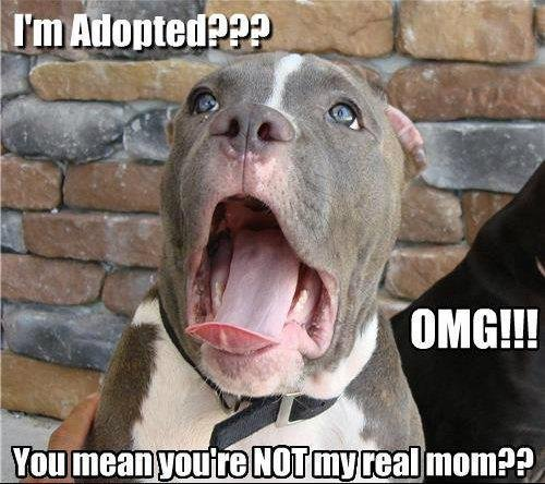 Adopted. OC.. No, no no! Haha You're not adopted. I just don't know who your father is. You see. Mom was kind of a bitch
