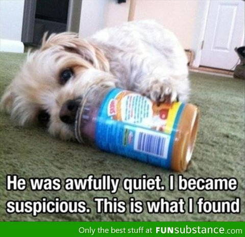 Adorable dog. . He was awfully quiet, I bacame suspicious. This is what I found Caly the best stuff at