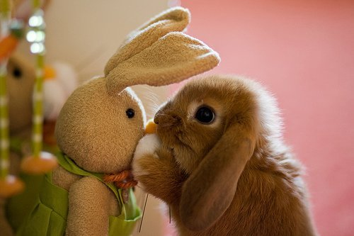 Adorable bunny. my friend showed me a picture of this bunny and i thought you guys would of liked to see it. i know its not funny or anything but i mean it does