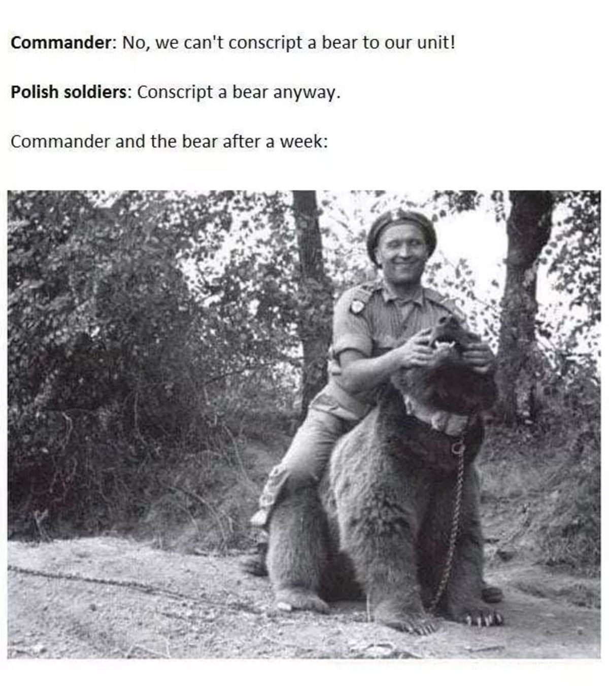 agonizing jazzy Monkey. .. That bear was a badass. He carried 100 pound boxes of artillery shells by himself which would usually take 4 men. He ate cigarettes, drank and even play fought