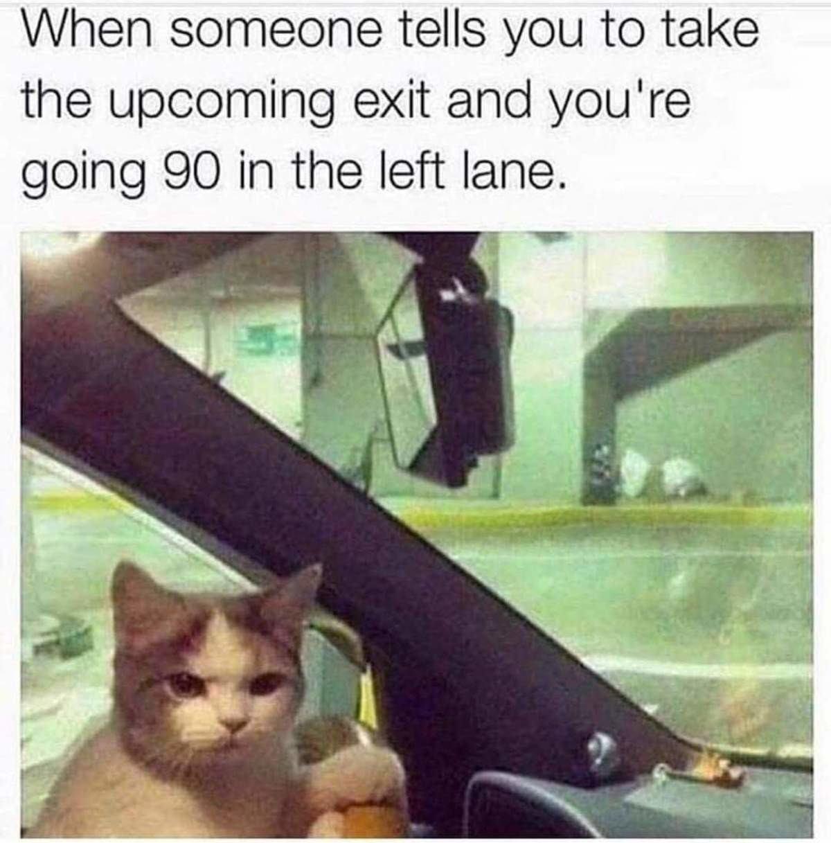 angry meow noises. .
