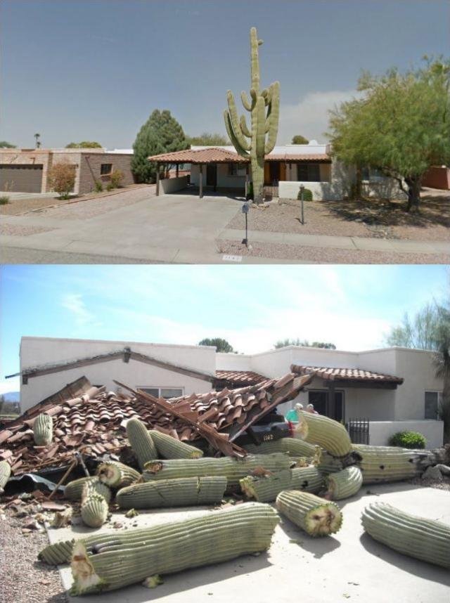 Asshole cactus