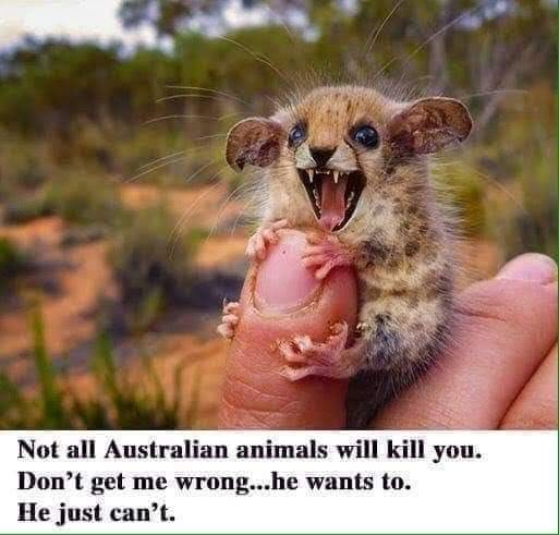 ausdsie. .. Wtf is that little adorable leopard murder mouse?