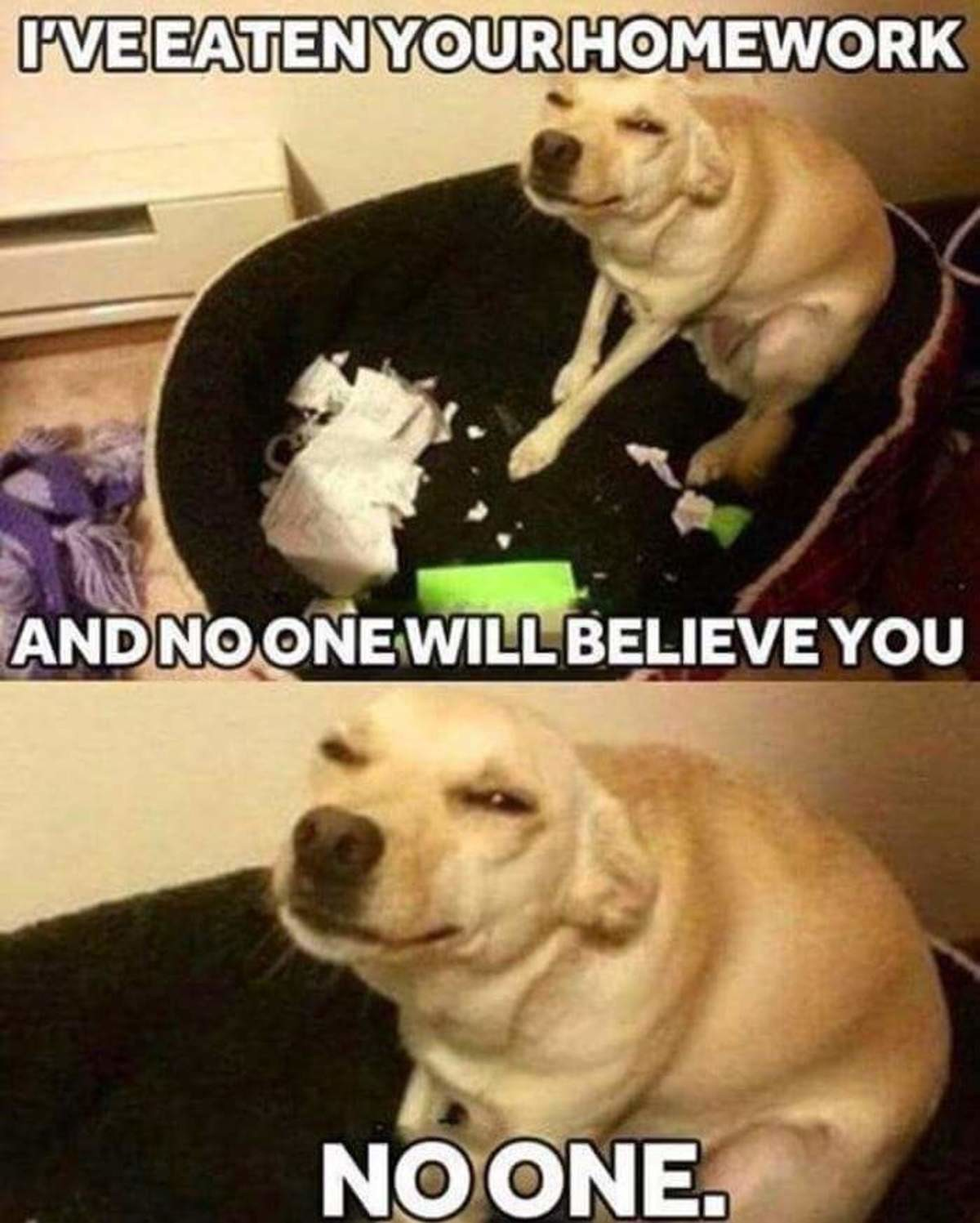bad, bad dog!. . iil. ', lellel, HMWRK litl _ i, NOONE WILL , ii, 'Youll. You can lick your balls goodbye then, buddy