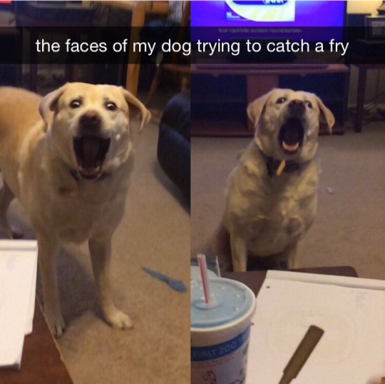 Beautiful. . the faces of my dog trying tut: catch a fry