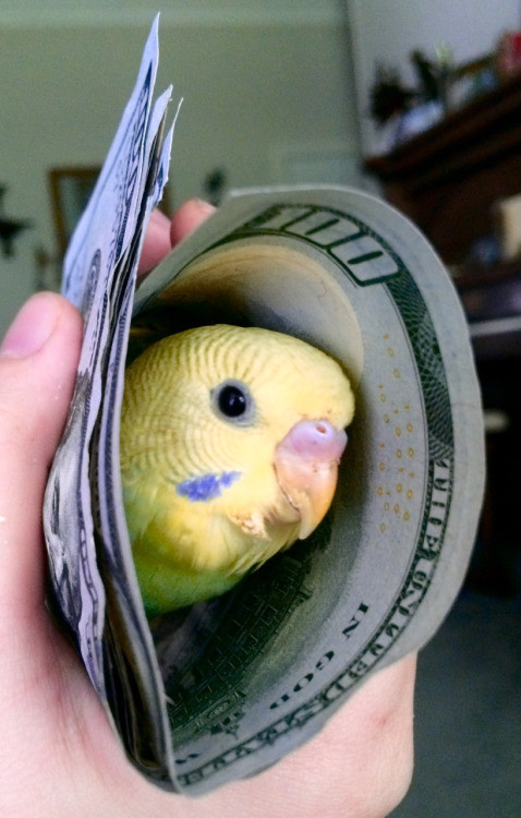 Birb of monies.. No thumb-whoring here. We all deserve a birb of monies to make us happy..