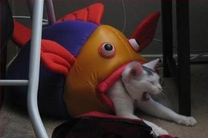 Cat Eats Fish. .
