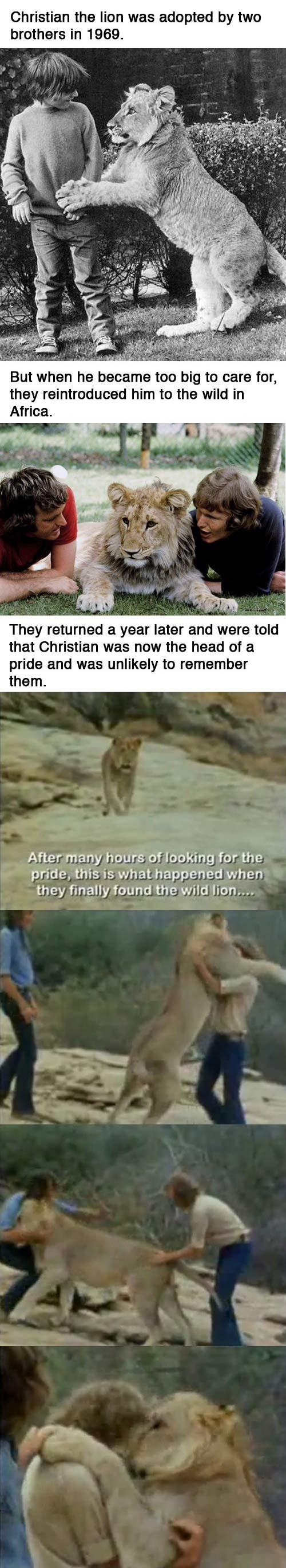 """Christian the Lion"". >Hope everyone has a great night and thanks for everything... At least it wasn't not felicity"