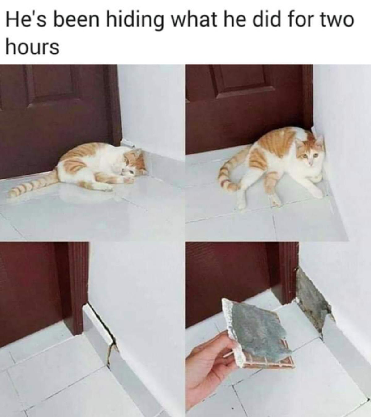 Cute. .. Fix it and pet him.