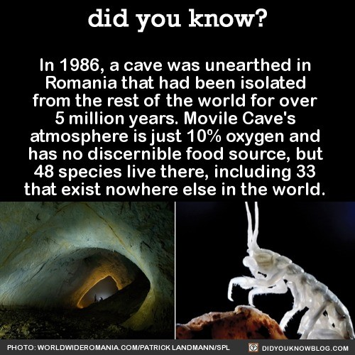damn. .. Would they die with more oxygen flowing in?