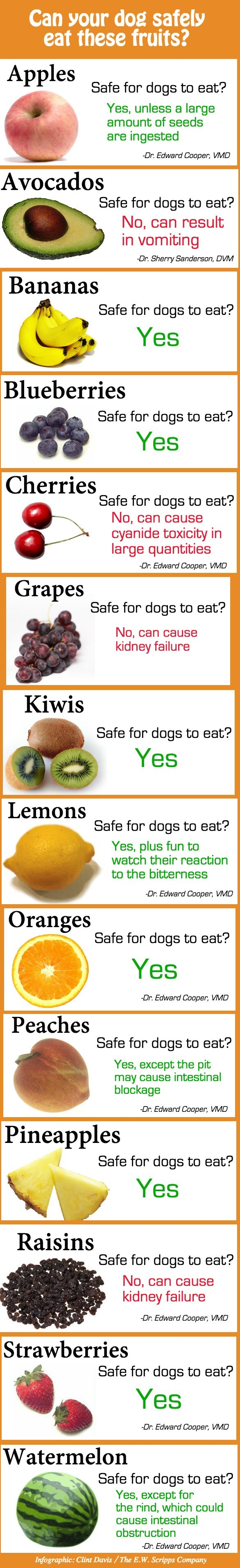 Dogs 'n Fruits. .. Fun fact: if your dog eats a lot of poo, he might have a vitamin deficiency. Feed him bananas and see if he stops eating poo
