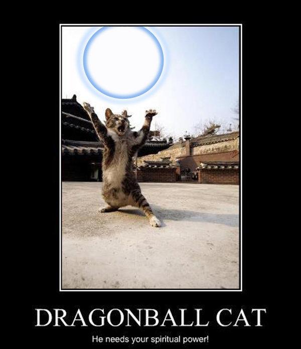 Dragonball Cat. My first photoshop job as thought this lolcat could do with a actual spirit bomb. He needs your spiritual power!. kaaaaaa maaaaaaa aaaaaaa MEEEEEEOOOOOOOWWW!!!!!!!!!