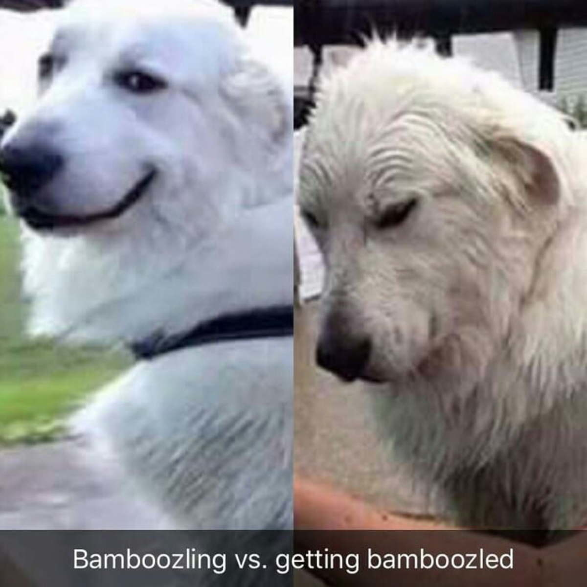 Drop top. . vs. getting bamboozled. When Wick finds out