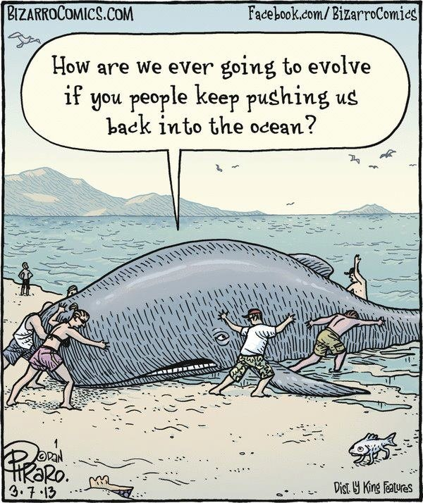 Evolution Comic. Well, it makes sense.... Duse How are We ever going, to evolve if gnu faeo? keep pushing us. All I want for my birthday is some big booty whales -Whale