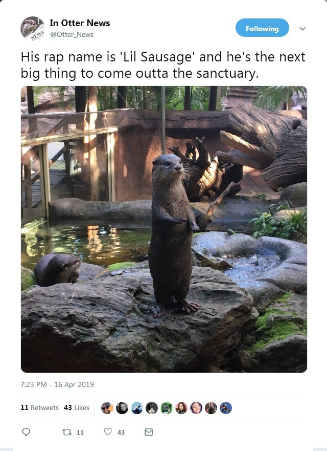 faithful momentous Monkey. https://twitter.com/Otter_News/status/1118203212648071169.