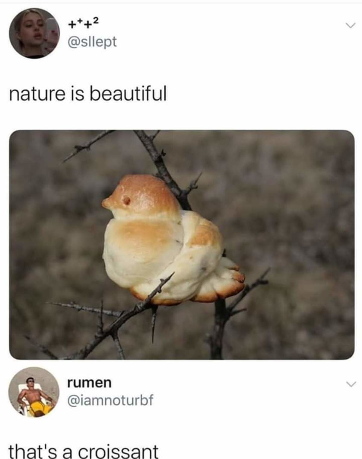 flat vast quick Termite. .. >That's a croissant Yes, crazy how nature do that