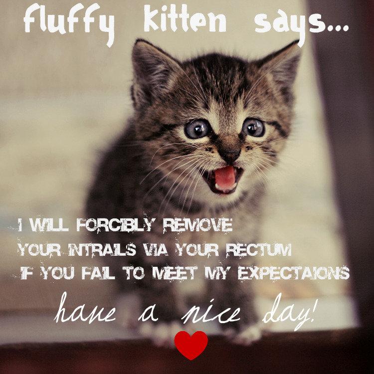 Fluffy Kitten Say's. .
