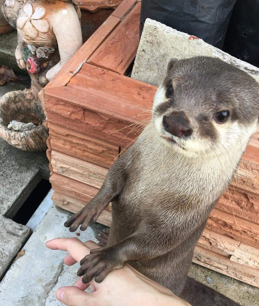 Follow me, hooman. I have much to show you.. https://twitter.com/Otter_News/status/1126792797766541312.