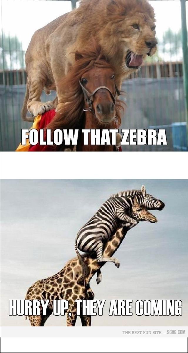 Follow that Zebra!. .