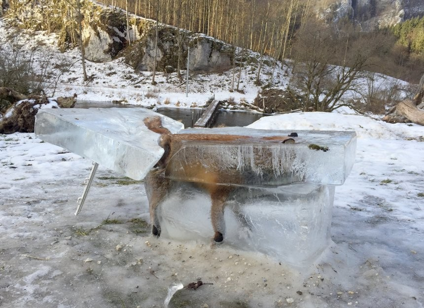 Fox cube. A fox broke through the ice into the Danube river and was cut out later. Still makes for a great ice cube to go with your drink..
