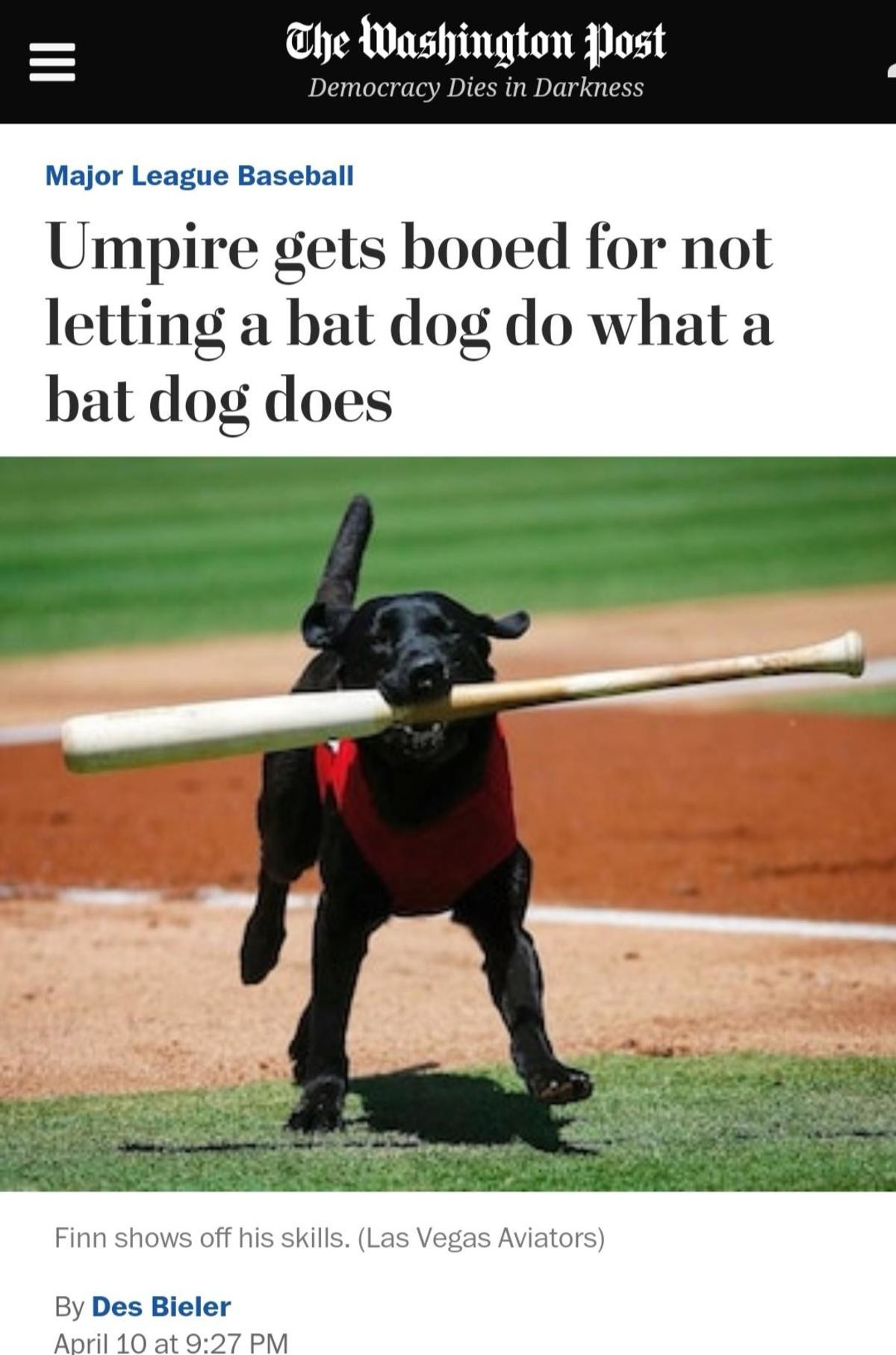Good boi. .. > Guy throws bat away > Dog wags His tail and geht's the bat anyway Crowd : How dare you