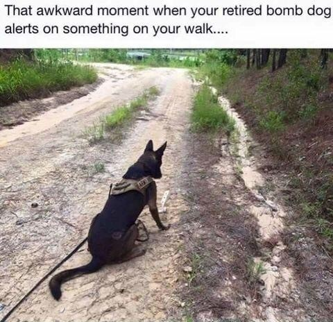 Good boy. join list: QtStuff (566 subs)Mention History.. Bomb dog's face when you're the bomb
