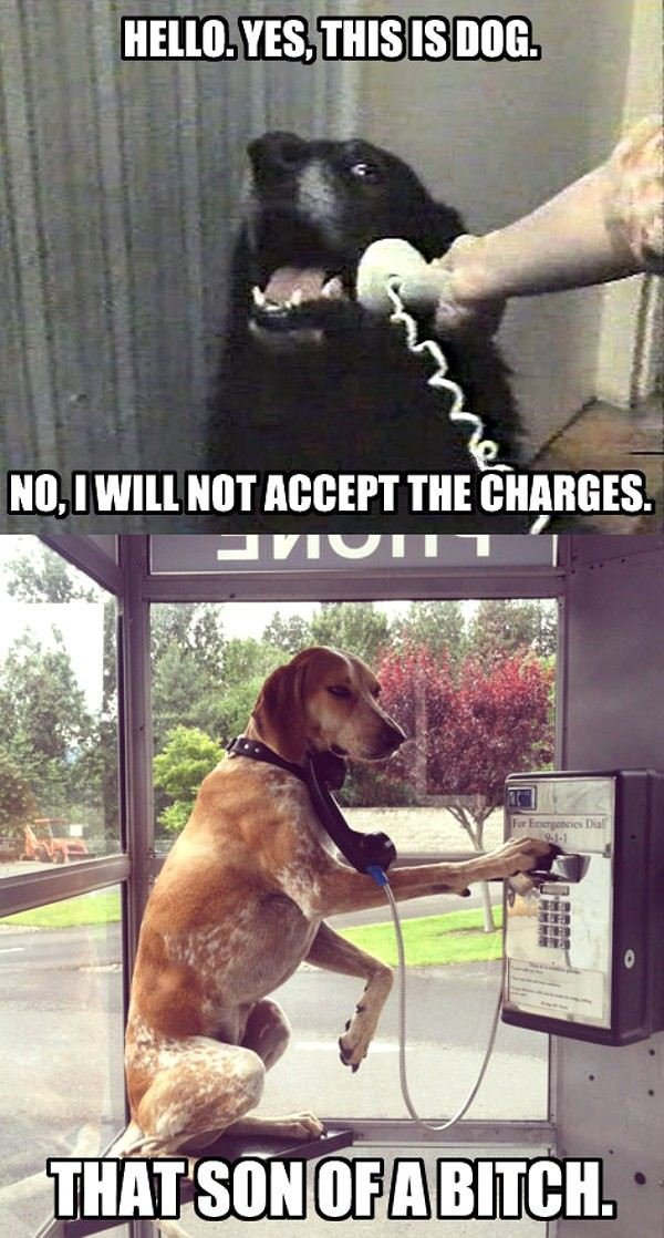 hello dawg?!. whata dick. Ito, I 'VIII HUT HEBERT THE CHARGES.. >Dogs reaction when