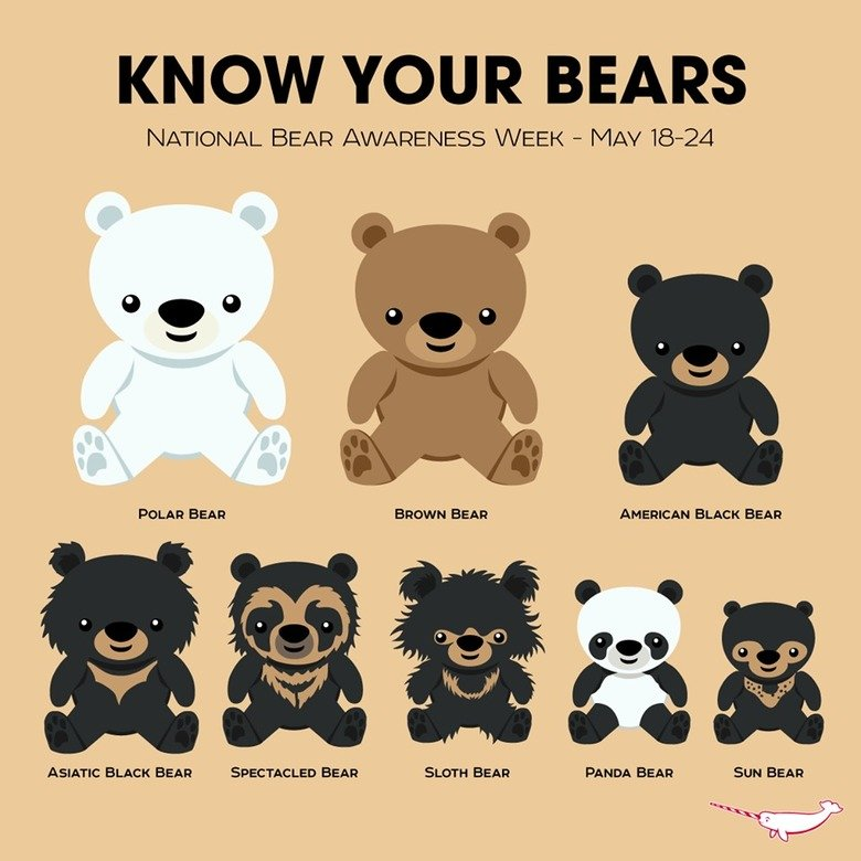 """Just in Case You Wondered. . KNOW YOUR BEARS NATIONAL BEN; (M/ ; WEEK - MAY POLAR BEAR BROWN BEAR AMERICA"""" BLACK BEAR ASIATIC BLACK BEAR SPECTACLED BEAR SETH BE"""