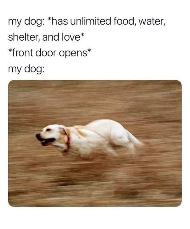 NO RUIN AWAY. .. The indoor cannot contain the zoomies.