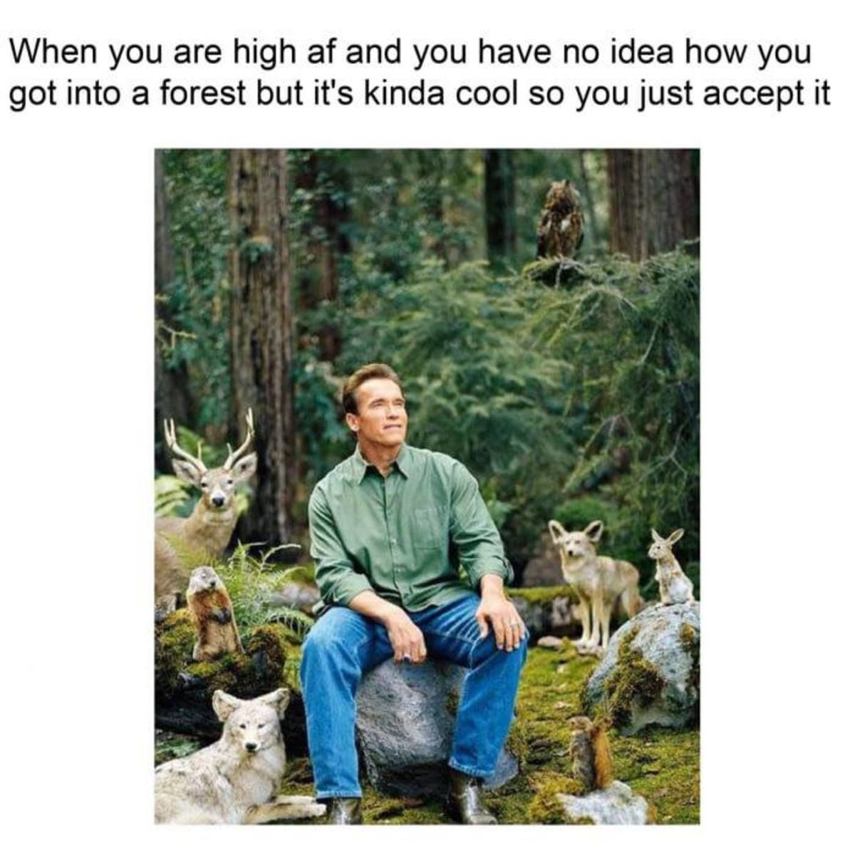 Once every month. . When you are high at and you have no idea how you got into a forest but it' s kinda cool so you just accept it. when the druid starts communing with nature, sometimes nature just comes for a chat