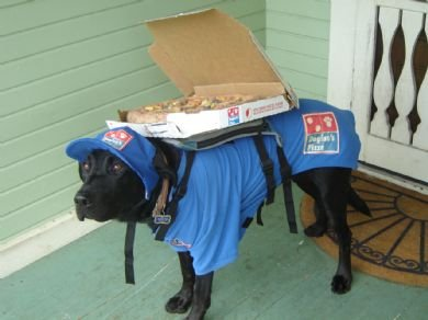 Pizza Dog. If I opened my door and saw this I would order Dominoes every day.