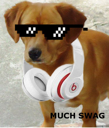 """Pug life. MUch Style, Such """"Beats"""".. THAT'S NOT A PUG YOU DUMB YOU'RE JUST TRYING TO BE FUNNY"""