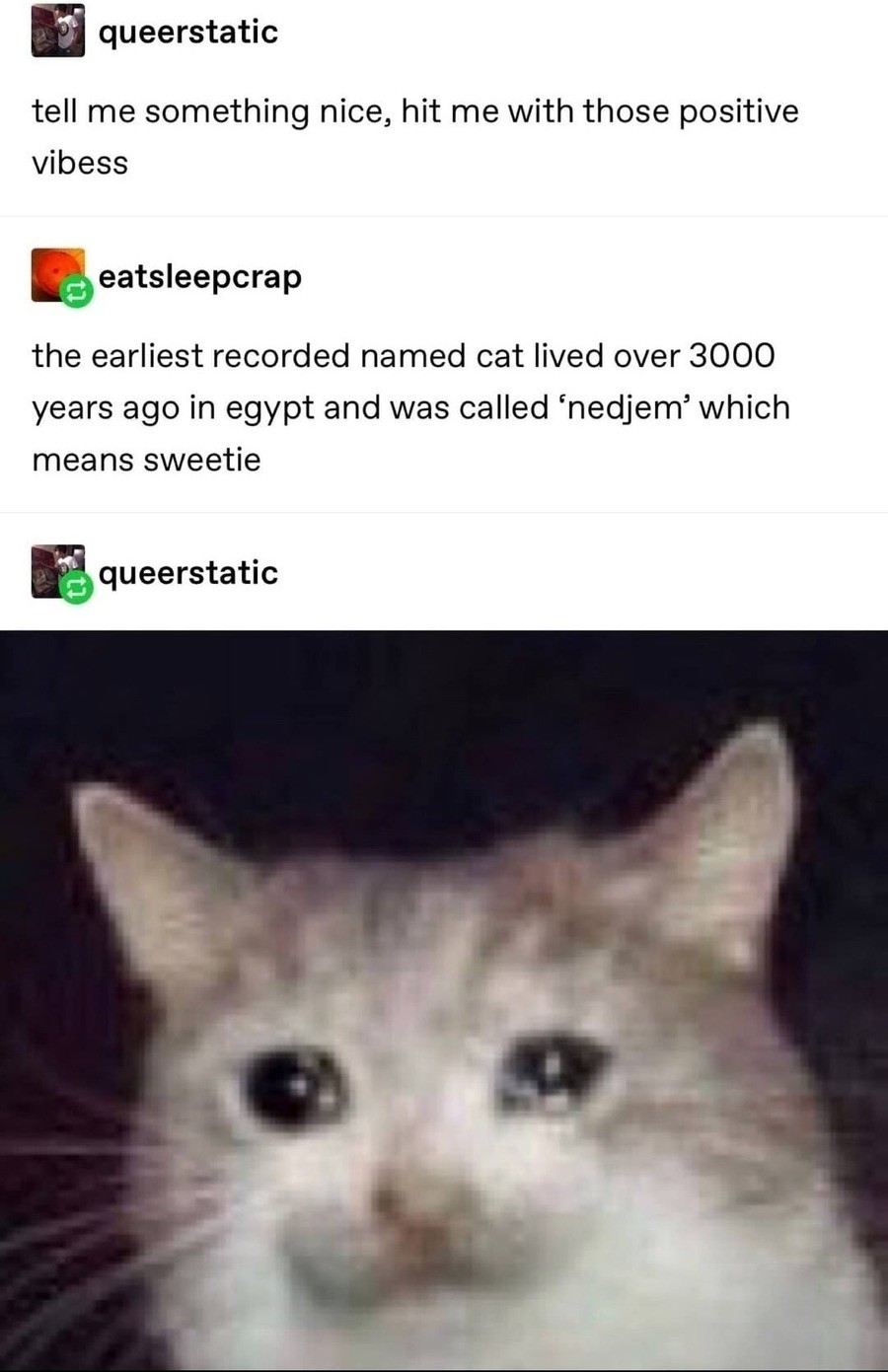 quack glistening wide-eyed Crane. .. Nedjem has been dead for 3,000 years.