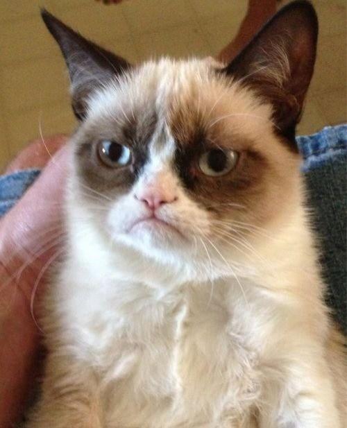 RIP Grumpy Cat. https://en.wikipedia.org/wiki/Grumpy_Cat#Death.