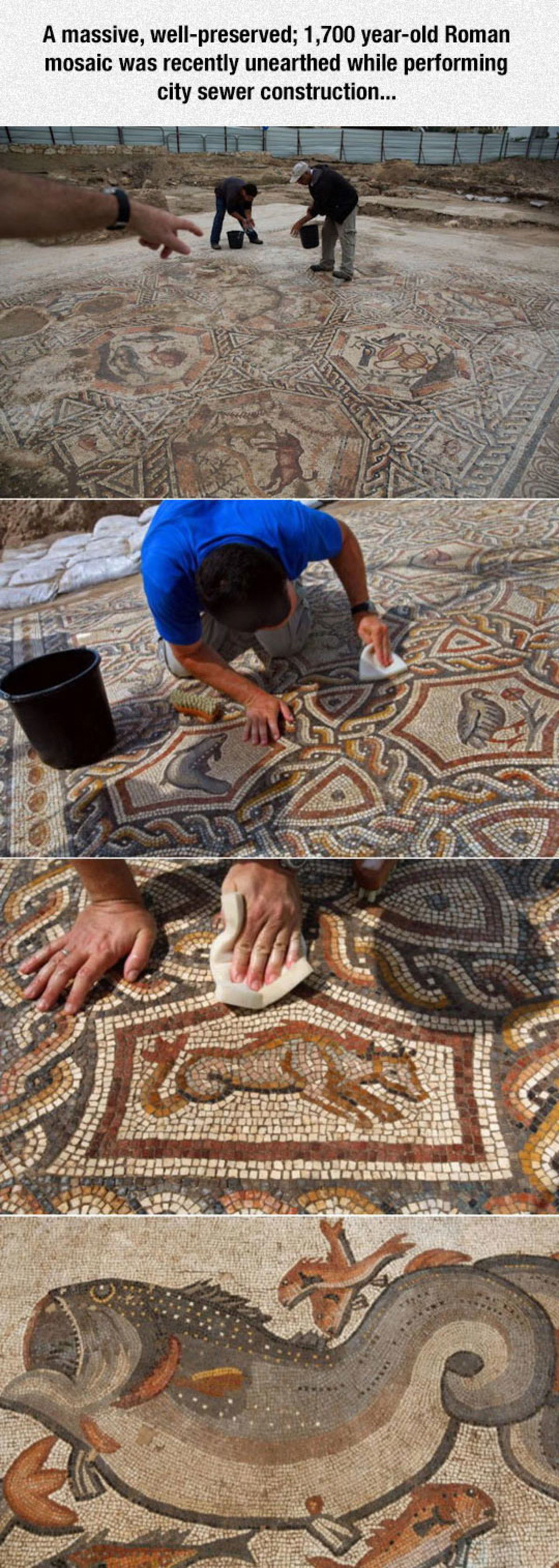 "Roman Mosaic. . A massive, ! , 1, 700 yearsold Roman mosaic was recently unearthed while performing city "" construction.... tfw you'll never see the Roman empire in it's full glory"