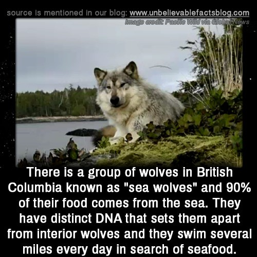 "sea wolf, wolf larsen. .. I read that as ""inferior"" and was lile "" wtf man dont be a dick to other wolfs"""