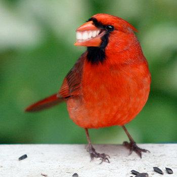 Smiley Bird. Looks so happy.