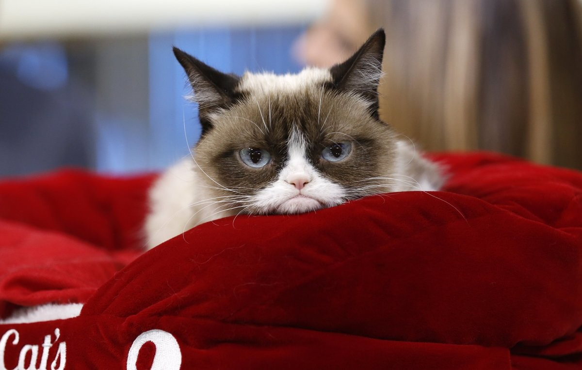 Sweet Dreams Grumpy Cat (2012-2019). The official Grumpy Cat Twitter has posted that Grumpy Cat passed away Tuesday morning due to complications from a urinary