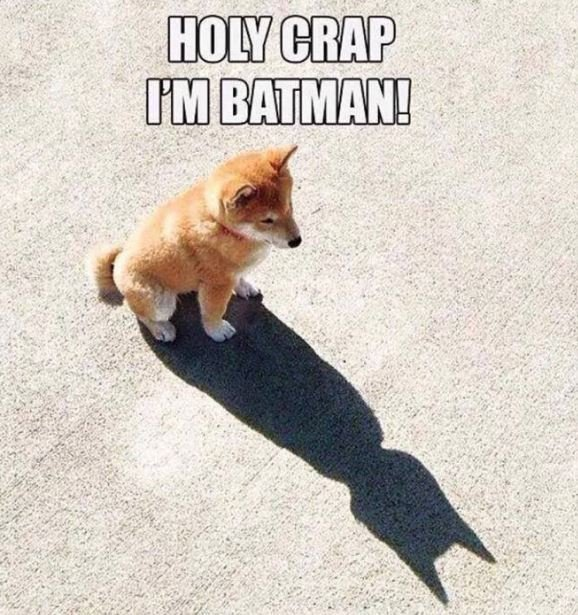 The doge that Gotham needs. Pass the whiskey.. how is doge pronounced? i just say doggy but i have heard a lot of people say dowge