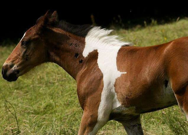 """Theres a Horse In This Horse. join list: Lewds4DHeart (1593 subs)Mention History join list:. As usual, posting some kind of lewds- bestiality this time, it seems. """"White horse fully inside a brown horse"""""""
