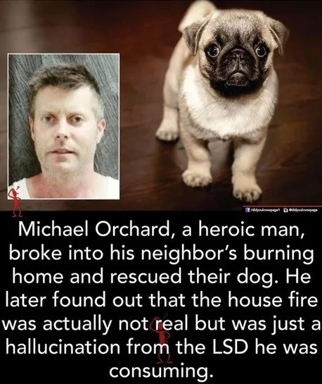 what a hero. .. Honestly I wouldn't press charges. Knowing that I have a neighbor willing to risk his life to save an animal of mine. Is worth far more than a broken window or